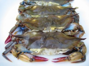 Soft Crabs
